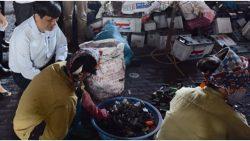 Kiểm tra nhiễm độc chì tại làng nghề tái chế chì Đông Mai